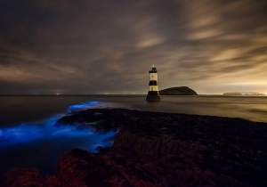 Image courtesy Creative Commons: Bioluminescence by Kris Williams