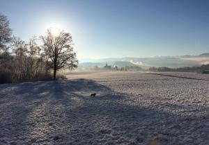 feb snow 3