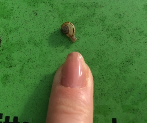 mini snail